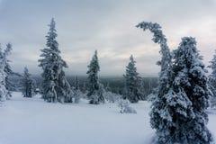 Χειμερινό δάσος στη βόρεια Φινλανδία στοκ φωτογραφίες
