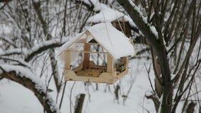 Χειμερινό δάσος στον ήρεμο καιρό, titmouse τρώγοντας από τον τροφοδότη πουλιών φιλμ μικρού μήκους