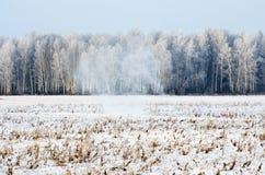 Χειμερινό δάσος στον παγετό και χιόνι στη χιονοθύελλα χιονοθύελλας Στοκ Εικόνες