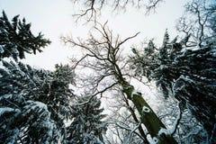 Χειμερινό δάσος στο χιόνι Στοκ φωτογραφίες με δικαίωμα ελεύθερης χρήσης