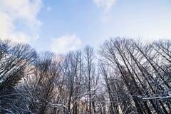 Χειμερινό δάσος στο χιόνι Στοκ Φωτογραφίες