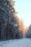 Χειμερινό άσπρο δάσος Στοκ Φωτογραφίες