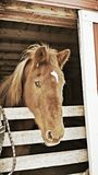 Χειμερινό άλογο Στοκ φωτογραφίες με δικαίωμα ελεύθερης χρήσης