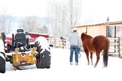Χειμερινό άλογο Στοκ Φωτογραφία