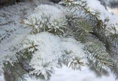 Χειμερινό δέντρο ομορφιάς με το χιόνι Στοκ εικόνες με δικαίωμα ελεύθερης χρήσης