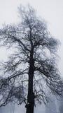Χειμερινό δέντρο στην ομίχλη στοκ εικόνες