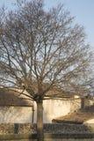 Χειμερινό δέντρο Palais des Papes Square, Αβινιόν Στοκ εικόνα με δικαίωμα ελεύθερης χρήσης
