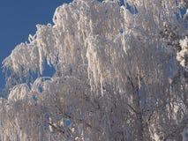 Χειμερινό ` ασημένιο ` δάσος Στοκ Εικόνα