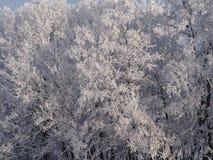 Χειμερινό ` ασημένιο ` δάσος Στοκ φωτογραφία με δικαίωμα ελεύθερης χρήσης