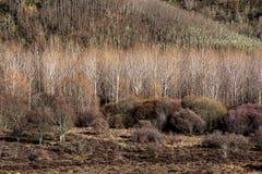 Χειμερινό δασικό τοπίο Στοκ Φωτογραφία