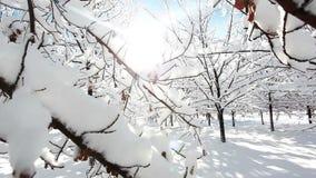 Χειμερινό δασικό τοπίο απόθεμα βίντεο