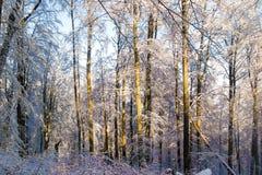 Χειμερινό βαθύ δάσος στοκ φωτογραφία με δικαίωμα ελεύθερης χρήσης