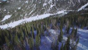 Χειμερινό δάσος άνωθεν φιλμ μικρού μήκους