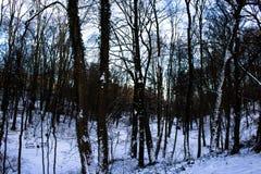 Χειμερινό δάσος, δέντρα, χιόνι Στοκ Εικόνες