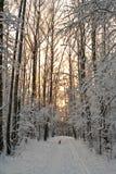 χειμερινό δάσος λυκόφατ&omic Στοκ φωτογραφία με δικαίωμα ελεύθερης χρήσης