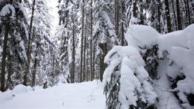 Χειμερινό δάσος που φωτογραφίζεται κωνοφόρο από το copter Μετακινηθείτε τον πυροβολισμό κίνηση αργή κλείστε επάνω φιλμ μικρού μήκους