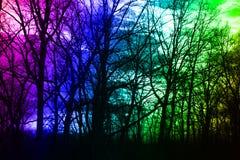 Χειμερινό δάσος στα χρώματα του ουρανού και του ήλιου στοκ φωτογραφίες