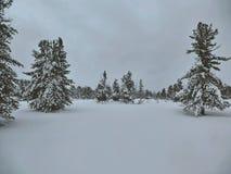 Χειμερινό δάσος στη Σιβηρία στοκ φωτογραφία με δικαίωμα ελεύθερης χρήσης