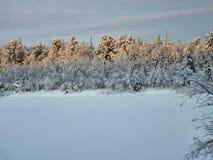 Χειμερινό δάσος στη Σιβηρία στοκ εικόνα