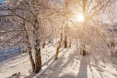 Χειμερινό δάσος στον παγετό στα βουνά στο ηλιοβασίλεμα Στοκ Εικόνα
