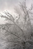 χειμερινό δάσος χιονιού Στοκ φωτογραφίες με δικαίωμα ελεύθερης χρήσης