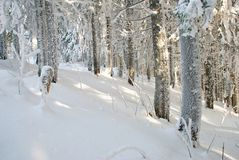 χειμερινό δάσος Στοκ Φωτογραφίες