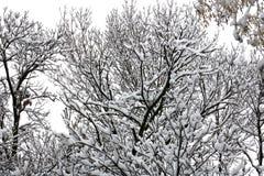 Χειμερινό δάσος, snown, δέντρο, νεφελώδες στοκ εικόνα