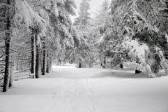 Χειμερινό δασικό τοπίο με το χιόνι Στοκ φωτογραφία με δικαίωμα ελεύθερης χρήσης