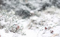 Χειμερινό δασικό τοπίο του χειμερινού δάσους μια ηλιόλουστη ημέρα Χιόνι-γ Στοκ Εικόνες