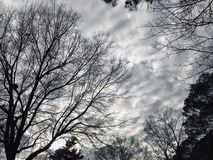 Χειμερινό δράμα στοκ φωτογραφία με δικαίωμα ελεύθερης χρήσης