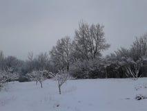 χειμερινό είδος Χειμώνας Τα δέντρα καλύπτονται με το χιόνι ομορφιά φυσική στοκ φωτογραφία με δικαίωμα ελεύθερης χρήσης