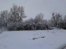 χειμερινό είδος Χειμώνας Τα δέντρα καλύπτονται με το χιόνι ομορφιά φυσική στοκ φωτογραφίες με δικαίωμα ελεύθερης χρήσης