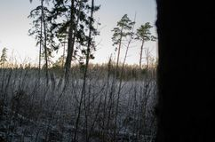 Χειμερινό ηλιοβασίλεμα από τη δασική άποψη, σχετικά με τον τομέα Otanki, Λετονία στοκ φωτογραφία με δικαίωμα ελεύθερης χρήσης