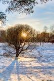Χειμερινό ηλιοβασίλεμα στο πάρκο πόλεων Στοκ Εικόνα