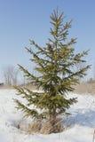 Χειμερινό κομψό δέντρο στοκ εικόνες