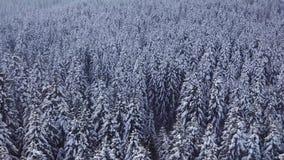 Χειμερινό κωνοφόρο δάσος με ένα copter επάνω από την όψη εναέρια όψη απόθεμα βίντεο