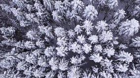 Χειμερινό κωνοφόρο δάσος με ένα copter επάνω από την όψη εναέρια όψη φιλμ μικρού μήκους