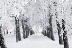 Χειμερινό πάρκο, αλέα σημύδων στοκ φωτογραφίες
