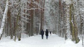 Χειμερινό πάρκο με τα χιονισμένα δέντρα, άνθρωποι που περπατούν στο πάρκο απόθεμα βίντεο