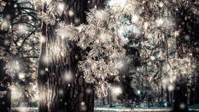 Χειμερινό πάρκο μια ηλιόλουστη ημέρα Δέντρα, δρόμος που καλύπτεται με το χιόνι την κρύα ημέρα απόθεμα βίντεο