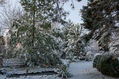 Χειμερινό παραμύθι στον κήπο Στο αριστερό είναι μια λίμνη με το strobus πεύκων πάγκων και πεύκων Στη σωστή σειρά του πυξαριού κάτ στοκ φωτογραφία