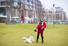 Χειμερινό πορτρέτο των σκυλιών περπατήματος εγκύων γυναικών στοκ φωτογραφίες με δικαίωμα ελεύθερης χρήσης