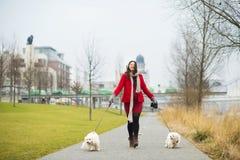 Χειμερινό πορτρέτο των σκυλιών περπατήματος εγκύων γυναικών στοκ εικόνες