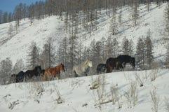 Χειμερινό πρωί αλόγων στα βουνά Στοκ εικόνα με δικαίωμα ελεύθερης χρήσης