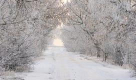 Χειμερινό πρωί σε ένα δασικό σύνολο του χιονιού Στοκ φωτογραφίες με δικαίωμα ελεύθερης χρήσης