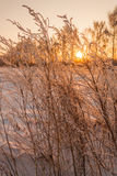 Χειμερινό πρωί Στοκ φωτογραφία με δικαίωμα ελεύθερης χρήσης