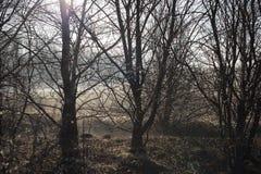 Χειμερινό πρωί Στοκ Φωτογραφία