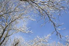 Χειμερινό πλαίσιο Στοκ φωτογραφίες με δικαίωμα ελεύθερης χρήσης