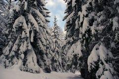 Χειμερινό τοπίο βουνά ενός στα δασικά Tatra βουνών Πολωνία Στοκ Φωτογραφίες