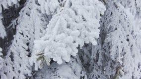 Χειμερινό τοπίο βουνών απόθεμα βίντεο